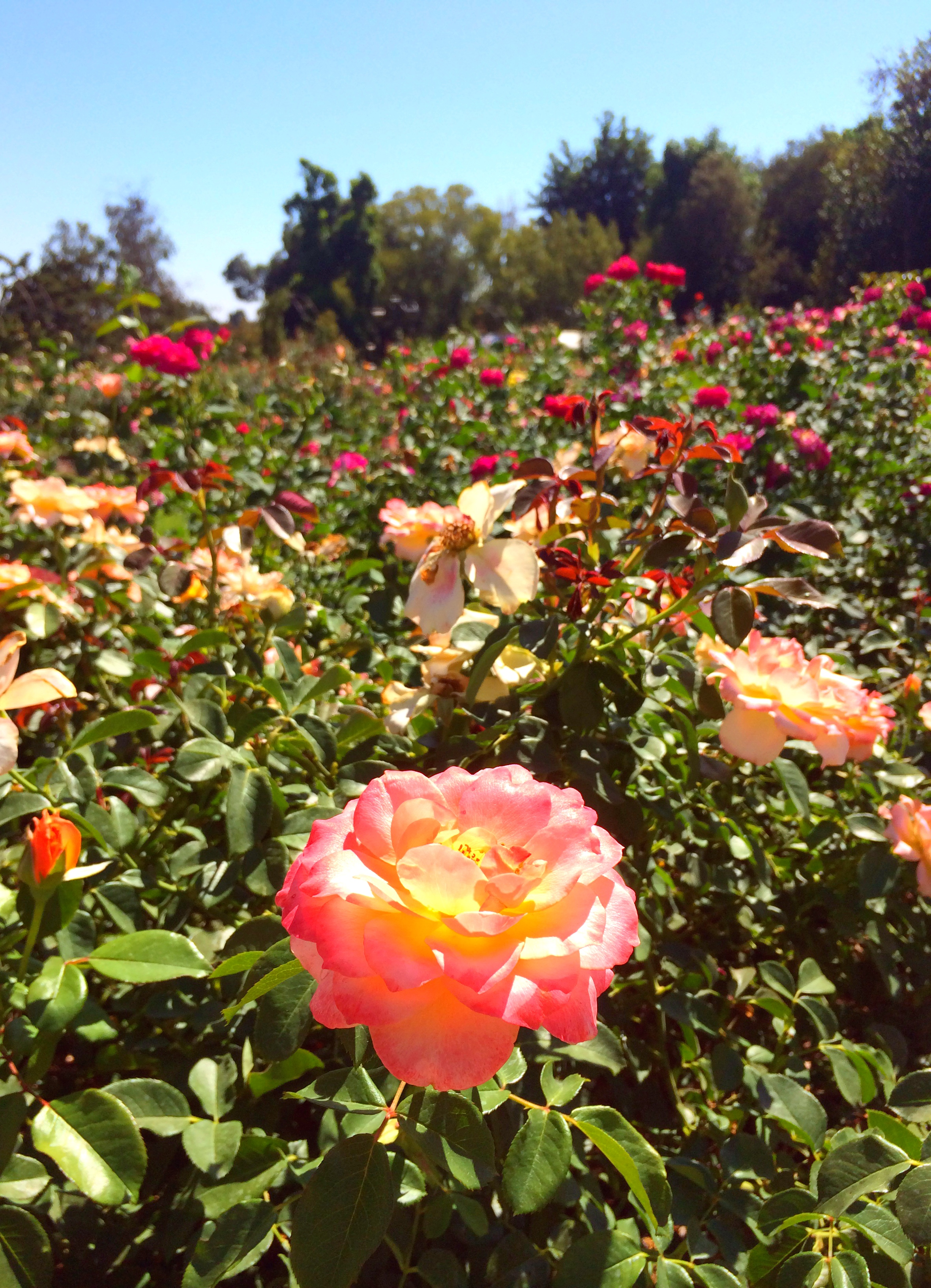 Oh, Snap!] An Afternoon at the Huntington Botanical Gardens | The ...