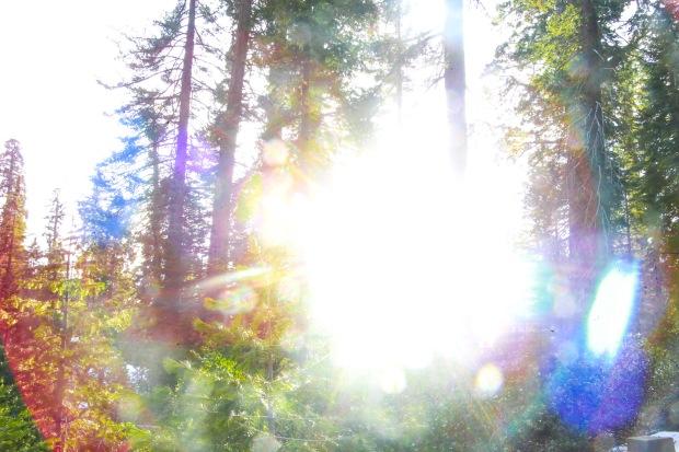 Sequoia-10