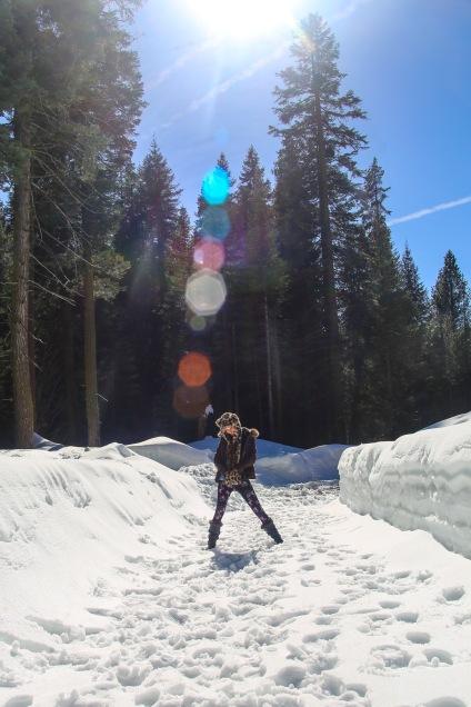 Sequoia-44