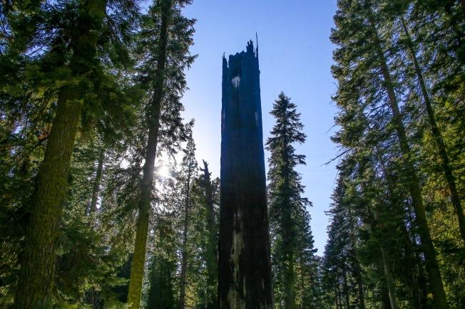 Sequoia-55