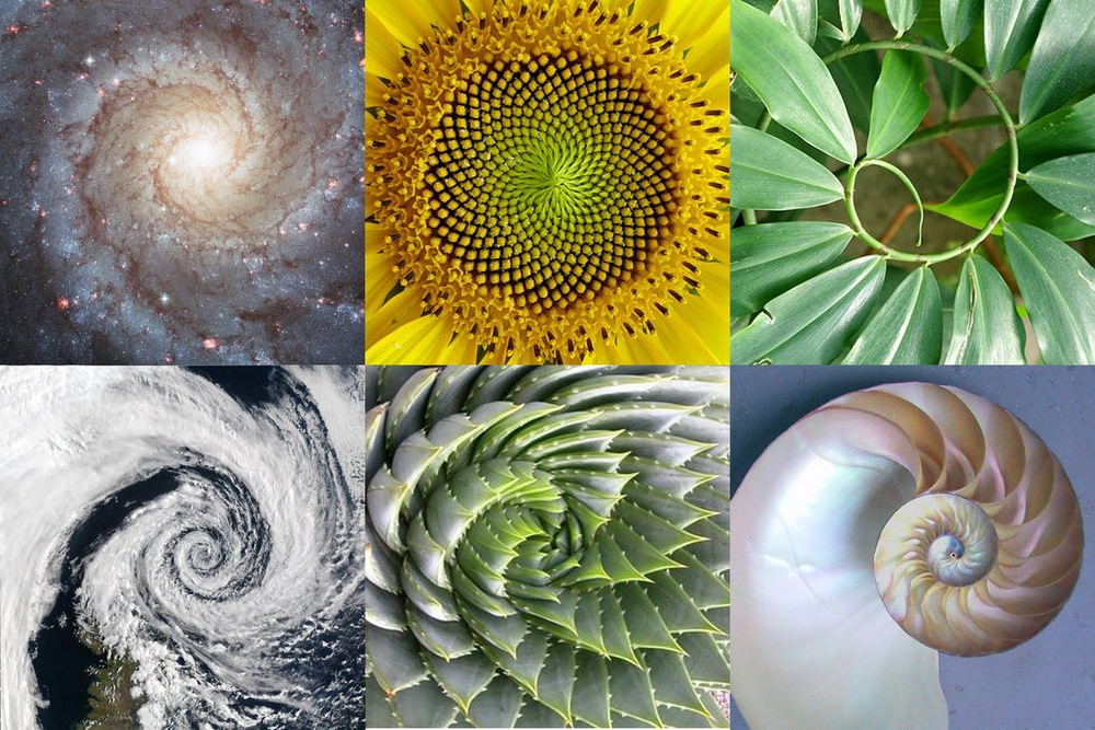 Golden Ratio : What It Is And Why Should You Use It In Design